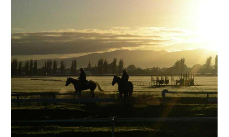 Research shows lower injury rates in New Zealand racehorses