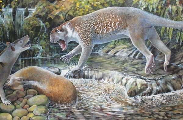 New species of extinct marsupial lion discovered in Australia