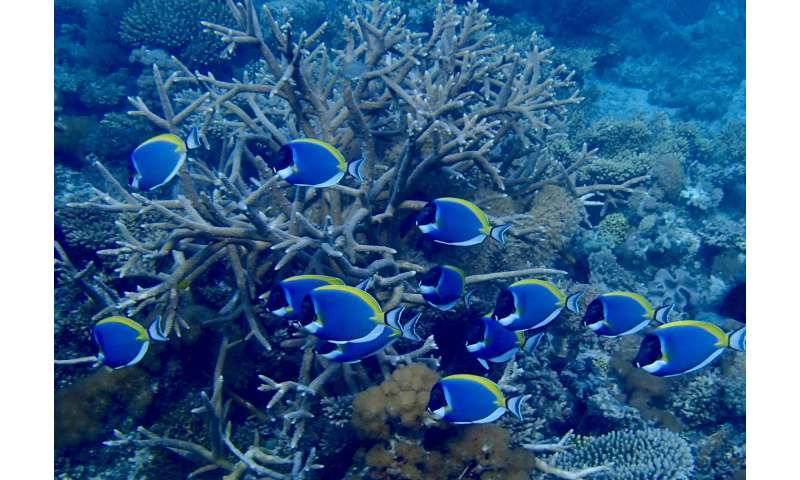 Climate change refuge for corals discovered (and how we can protect it right now)