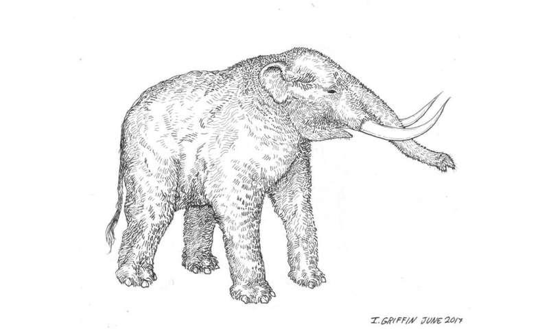 3-D balayant des fossiles pour aider les chercheurs du monde à étudier les mastodontes