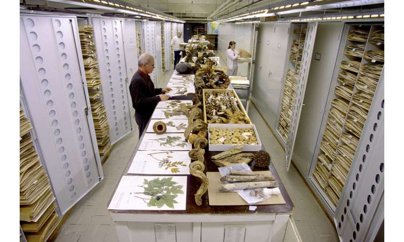 Artificial neural networks could power up curation of natural history collections