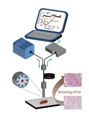 Differences in fat tissues' light reflecting properties make for easy detection