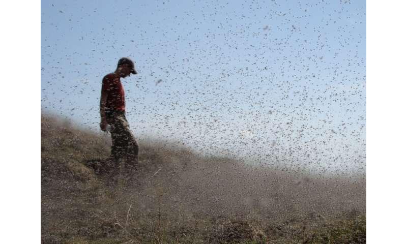 Enormous swarms of midges teach about interconnected landscapes