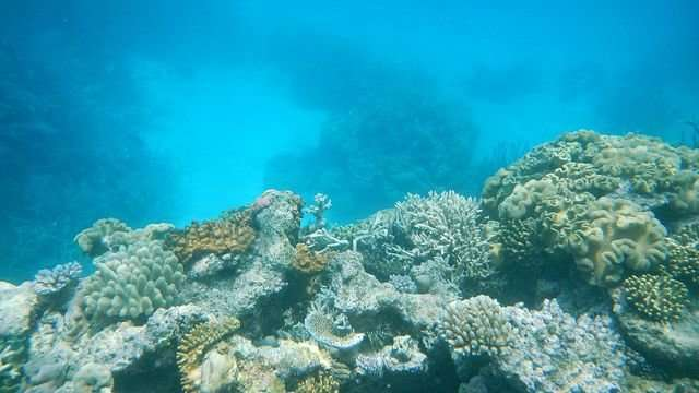 Great Barrier Reef protected zones help fish in even lightly exploited areas