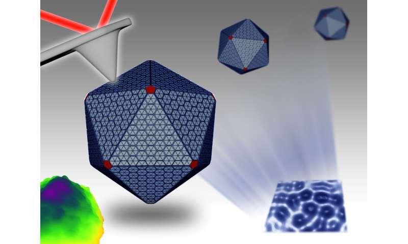 Nanotechnology reveals hidden depths of bacterial 'machines'