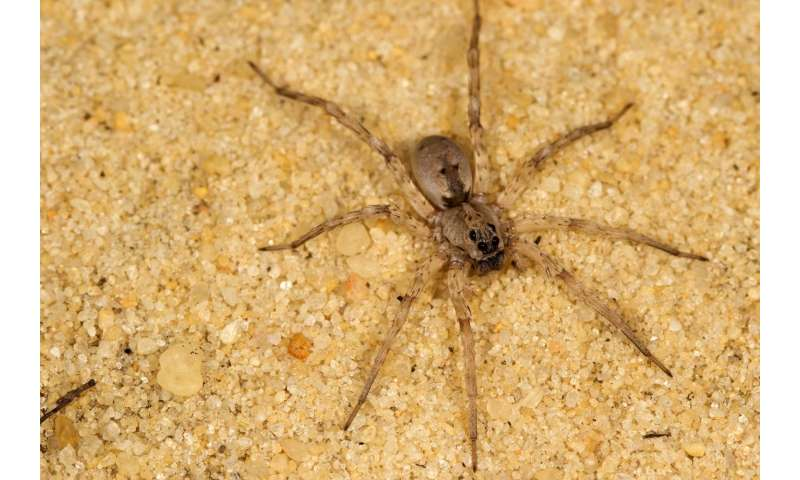 Noise pollution from gas compressors changes abundance of insects, spiders