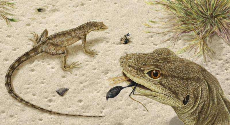 Paleontologists find the oldest, most complete fossilized iguanian in the Americas