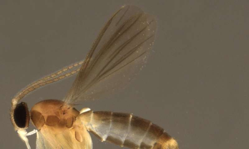 Researchers discovered fungus gnat paradise in Peruvian Amazonia