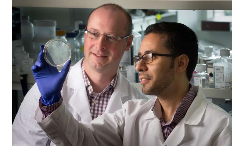 Researchers chart pathway to 'rejuvenating' immune cells to fight cancers and infections