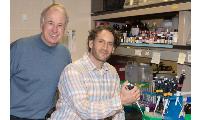Scientists discover powerful potential pain reliever