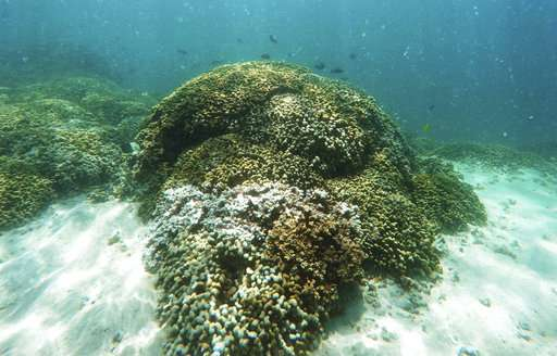 3-year global coral bleaching event over, but still bad