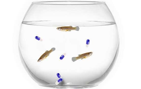 Antidepressants from urine are making fish less afraid of predators