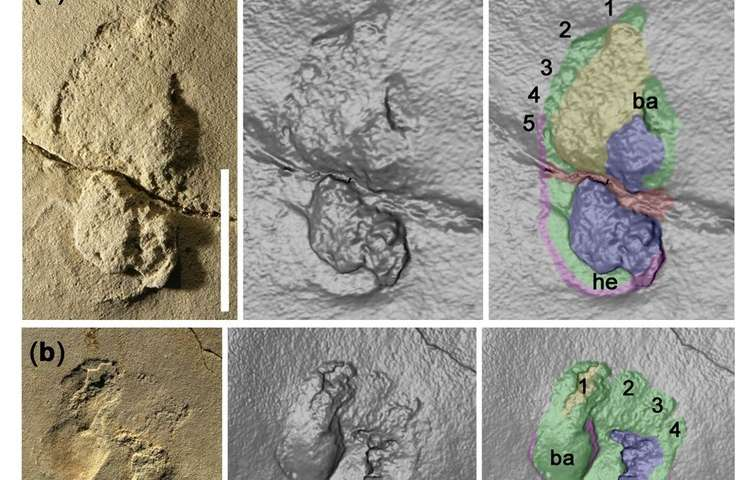 Controversial footprint discovery suggests human-like creatures may have roamed Crete nearly 6m years ago