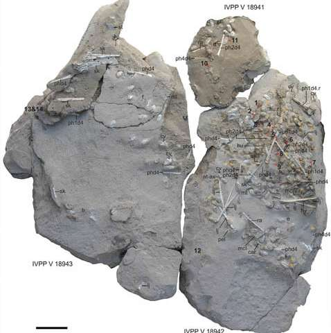 Exceptionally preserved eggs and embryos reveal the life history of a pterosaur