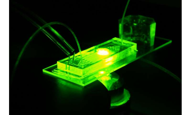 Organ-on-a-chip model offers insights into premature aging and vascular disease
