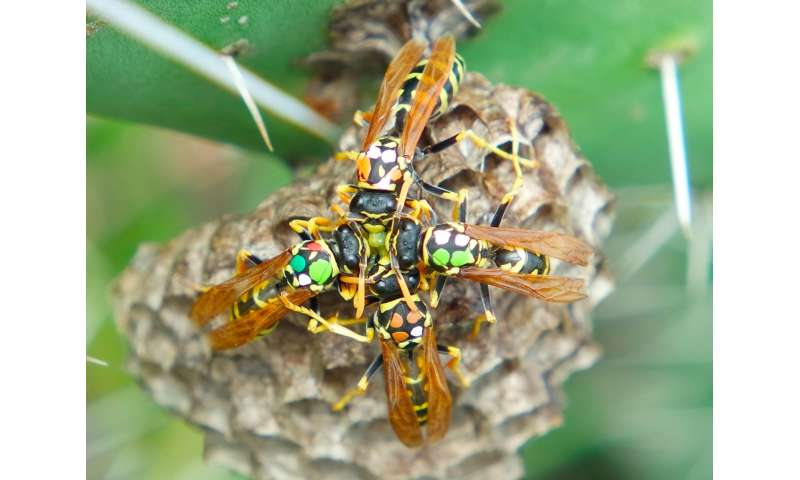 Scientists discover even wasps make trade deals