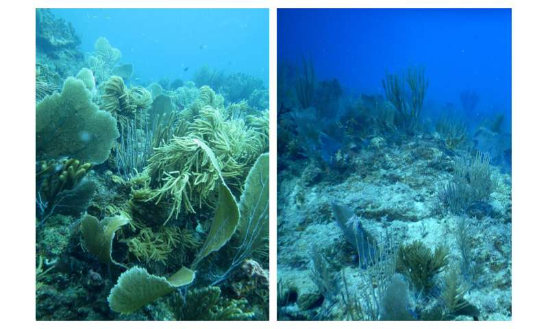 Scientists get early look at hurricane damage to Caribbean coral reefs