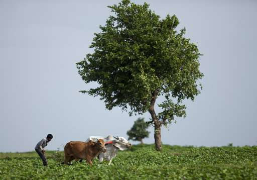 Farmer suicides rise in India as climate warms, study shows