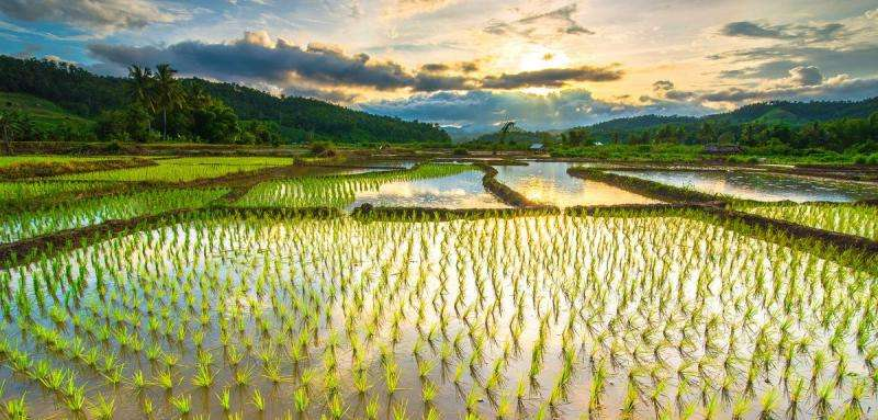 Manipulating plant enzymes could protect crops from flooding