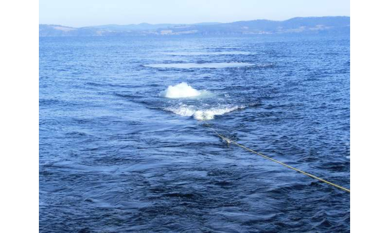 New research reveals impact of seismic surveys on zooplankton