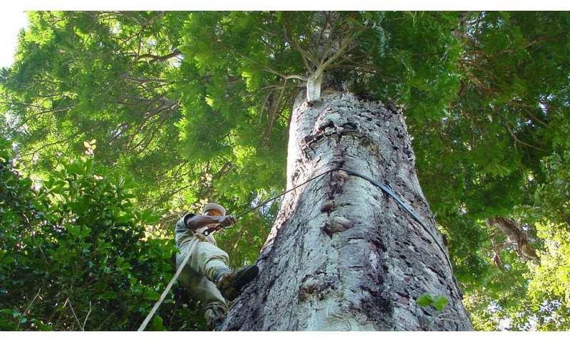 Majestic, massive tree species discovered in Brazil