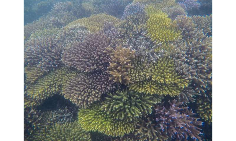 Searching for super-corals living on the edge