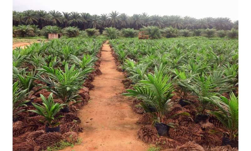 Study explores risk of deforestation as agriculture expands in Africa