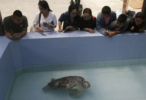 Surgeons remove 915 coins swallowed by Thai sea turtle