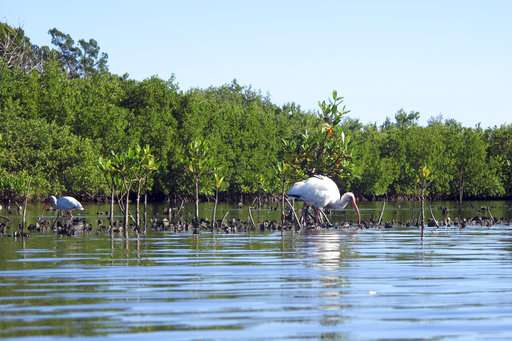Wildlife-rich lagoon in Florida threatened by building boom