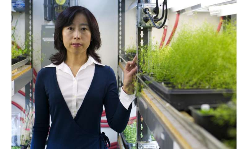 Researchers find crucial clue to manipulating reproduction in plants