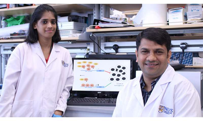 Researchers uncover novel pathway to suppress virus-induced cancers
