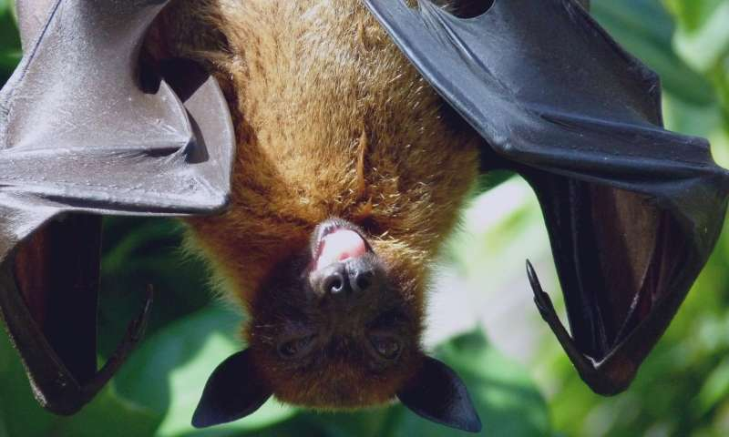 Genetic basis for extended lifespan and cancer resistance discovered in long-lived bats