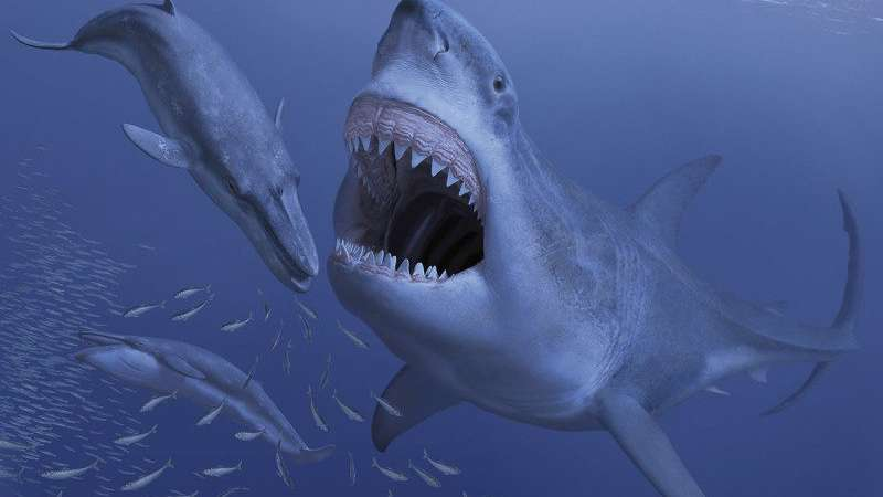 Giant ancient shark may have gone extinct due to extinction of its