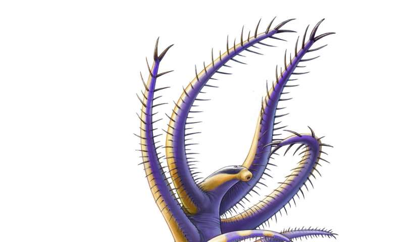 500-million year-old species offers insights into the lives of ancient legged worms
