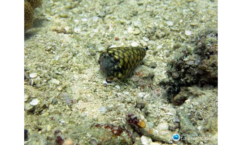 Acid trip makes clumsy cone snails miss their prey