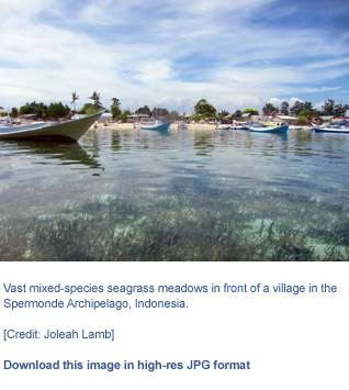 Underwater seagrass beds dial back polluted seawater