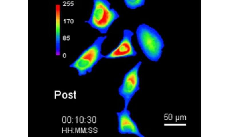 Biochemists develop new way to control cell biology with light