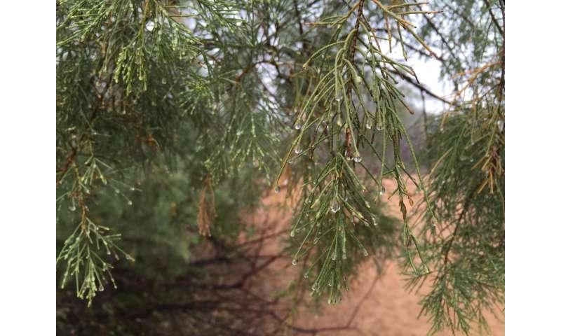 Study of non-rainfall water in Namib Desert reveals unexpected origins