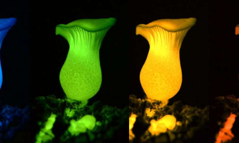 Researchers find means by which mushrooms glow