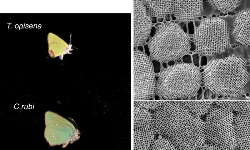 Ultra-high resolution images of butterfly wing crystals offer clues to how nano-scale structures form