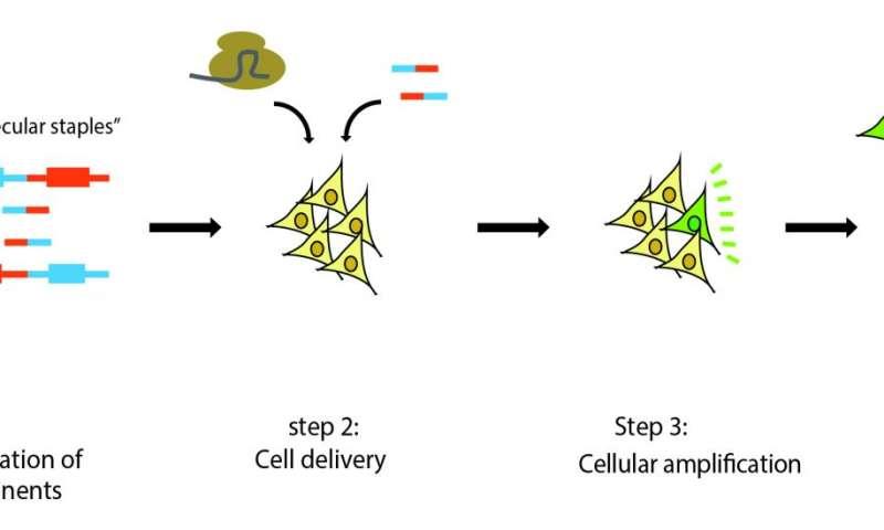 A protein, a 'molecular staple' and CRISPR to develop an Ewing sarcoma model
