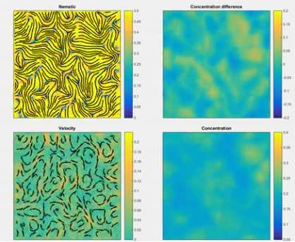 Liquid-crystal and bacterial living materials self-organize and move in their own way
