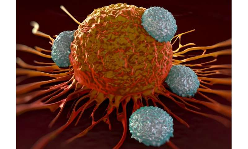 A lead candidate for immunotherapy may increase tumour growth in certain cancers