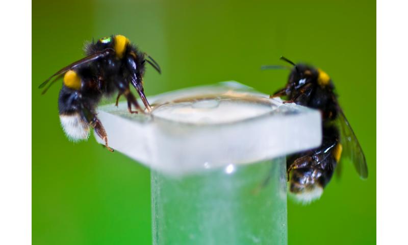 Nicotine enhances bees' activity