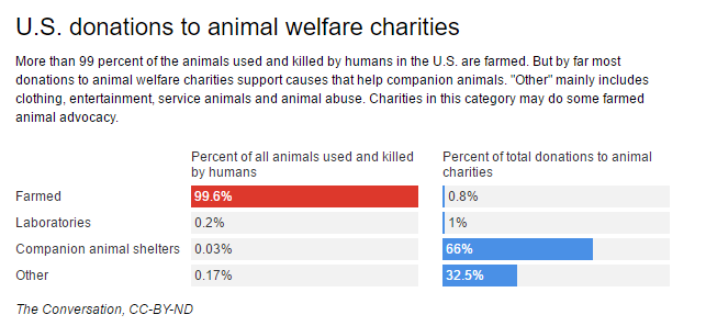Want to help animals? Don't forget the chickens