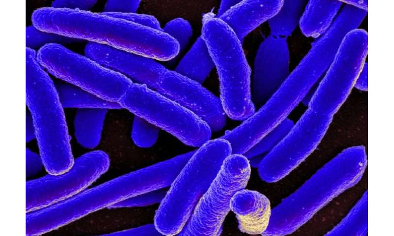 Basic building blocks of bacterial 'hair' could lead to new antibiotics