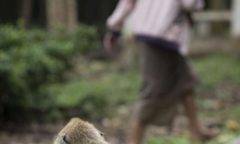 Researchers identify mammals that are most likely to harbor viruses risky to humans