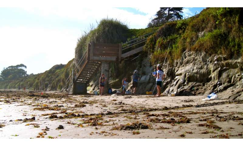Scientists study changes in the biodiversity of California's sandy beaches