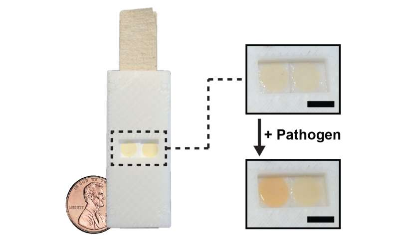 Researchers develop yeast-based tool for worldwide pathogen detection