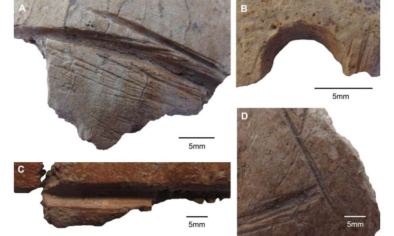 Skull fragments with carved long, deliberate lines found at Gobekli Tepe